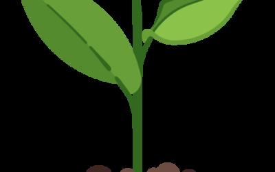 Cours 1 – Les besoins nutritifs des êtres vivants et leur distribution dans l'organisme